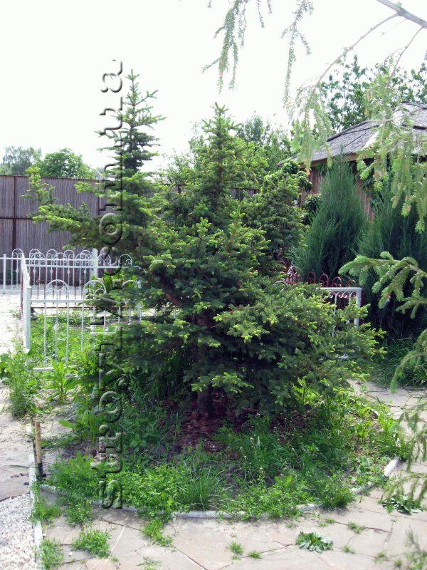 Озеленение частного двора фото 5