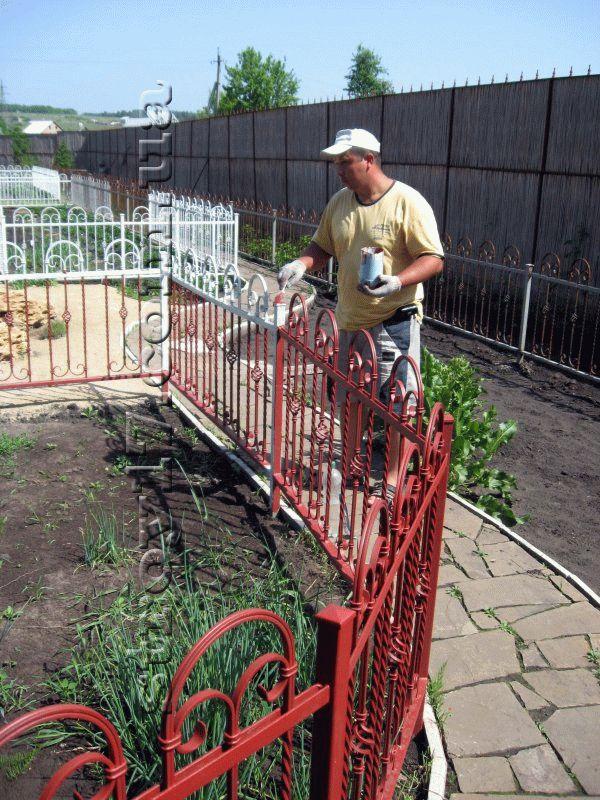 Озеленение частного двора фото 6