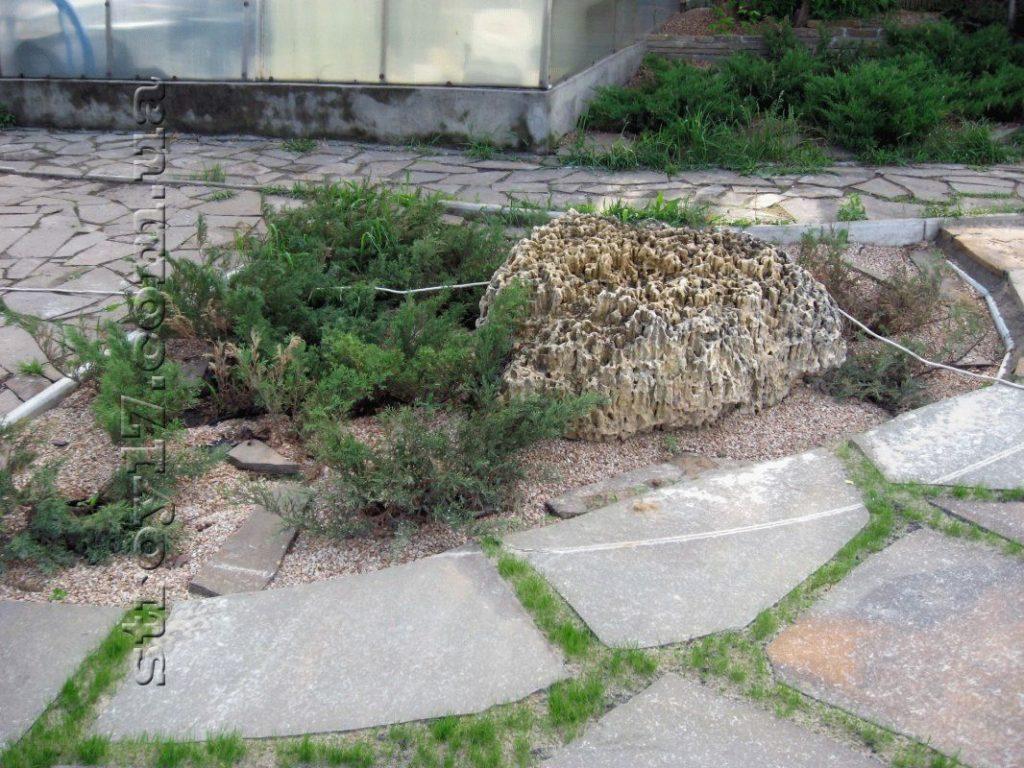 Натуральный камень и можжевельник фото