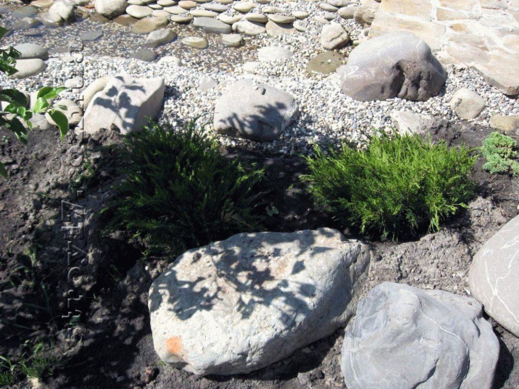 Озеленение частного двора фото 1