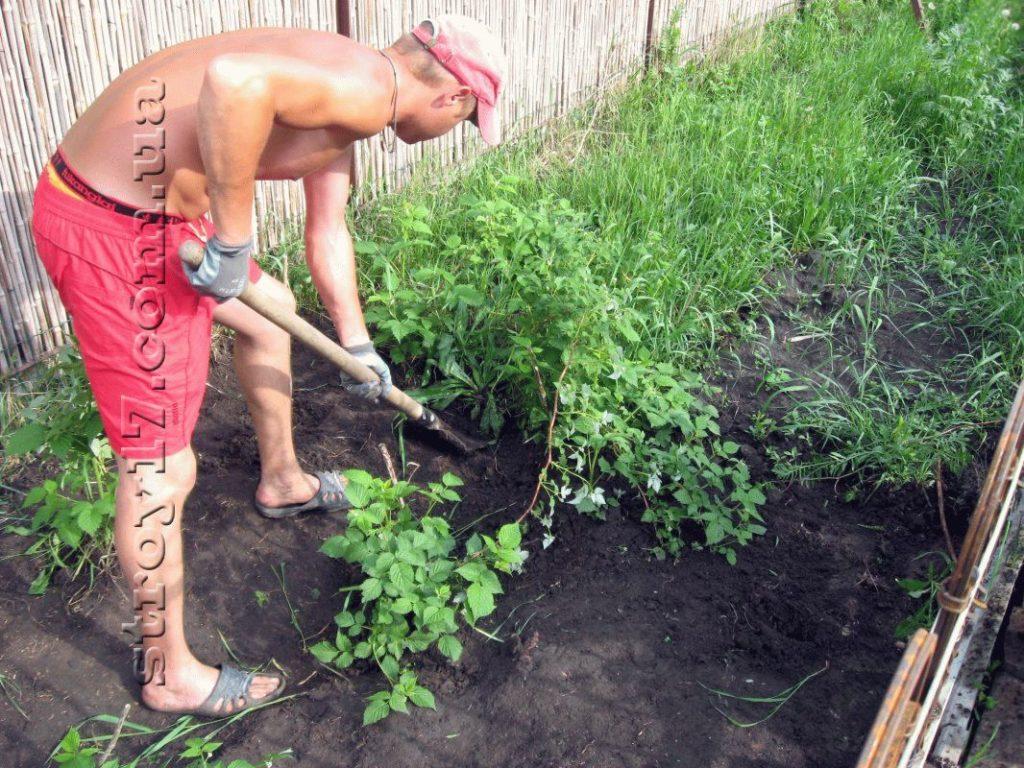 Подготовка под посев газона фото