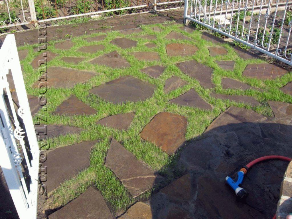 Прорастание газонной травы фото