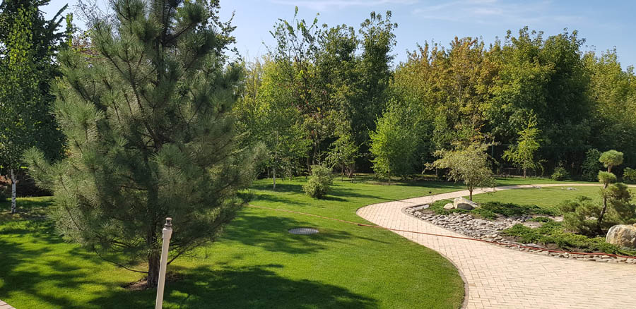 Озеленение двора частного дома фото 1