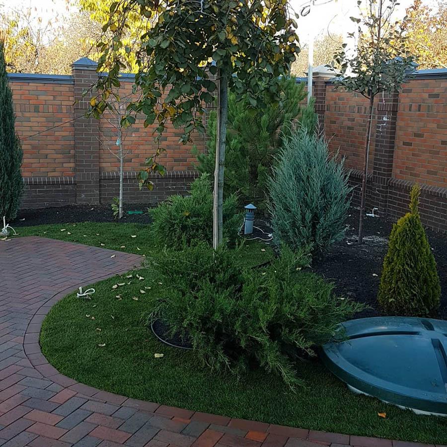 Озеленение двора частного дома фото 3